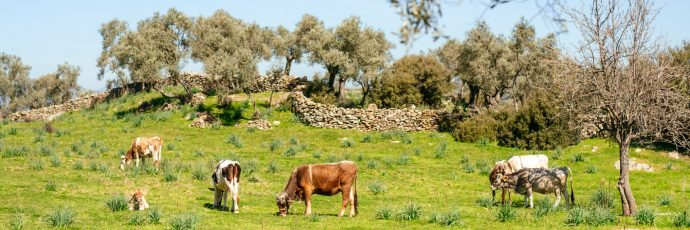Extra-Virgin Olive Oil from Aegean Indigenous Landscapes