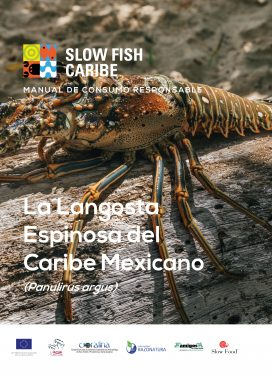 La Langosta Espinosa del Caribe Mexicano