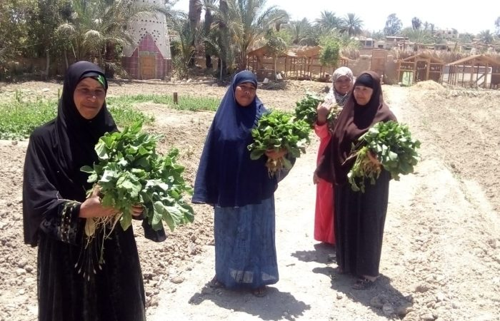 Community Gardens Are Taking Fayoum by Storm