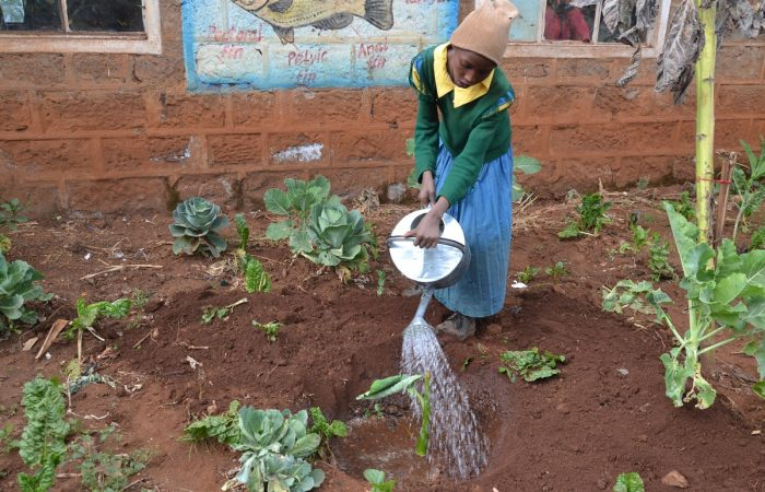 Gli orti scolastici: l'educazione senza confini che garantisce un futuro migliore