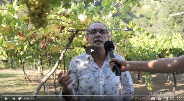 Alvaro Proietti Modi – L'uva croccante delle cascate